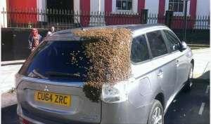 OMG! रानी की तलाश में मधुमक्खियों ने किया कार का पीछा