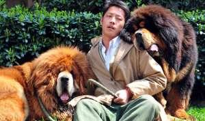 कभी करोड़ों में बिकते थे, आज चीन की सड़कों पर लावारिस घूम रहे हैं ये कुत्ते