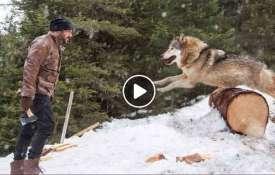 salman khan tiger zinda hai wolf - Khabar IndiaTV