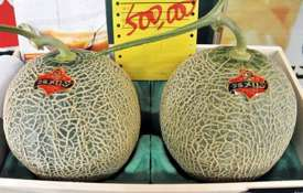 Japan: Pair of premium melons sell for record $29,300 | AP- Khabar IndiaTV