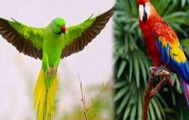parrot- Khabar IndiaTV