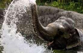 Elephant - Khabar IndiaTV