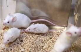 rats- India TV