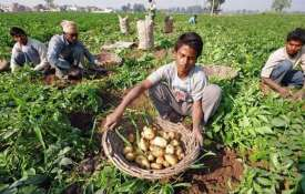 PepsiCo is suing farmers in India for growing the potatoes it uses in Lays chips- India TV