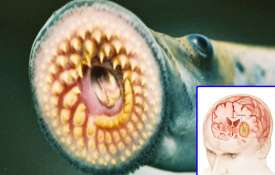 Jawless fish sea lamprey may help to treat brain tumor - India TV