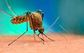 National Dengue Day- India TV