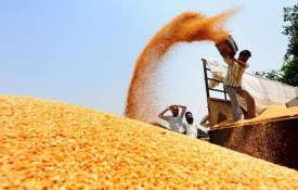 Record production of wheat in Punjab- India TV