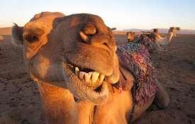 camel- India TV