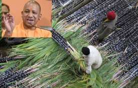 Up CM Yogi Adityanath said sugar Mill owner give full payment of sugarcane price by August- India TV