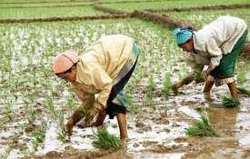 Kharif sowing hit by deficit rains; acreage down 27 per cent so far - India TV