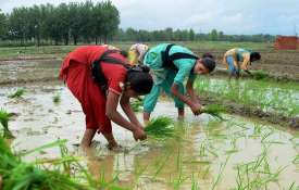 Kharif Sowing reduced 9 percent compared to last year- India TV