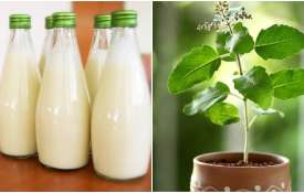 Milk and Tulsi- India TV