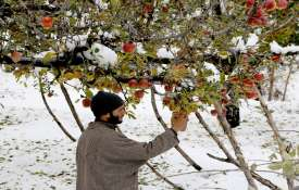 J&K admin may launch scheme next week for procurement of apples- India TV