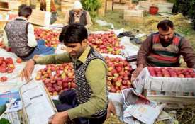 Govt to procure apples from JK farmers directly; payment through DBT- India TV