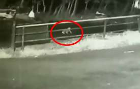 Kerala: A one-year-old child falls out of a moving car in Munnar region of Idukki district | ANI- India TV