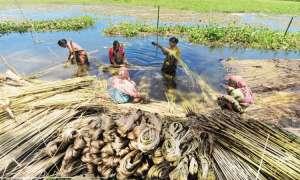Union Cabinet: कच्चे जूट का MSP बढ़कर हुआ 3950 रुपए क्विंटल, किसान मंडी के लिए भूमि की आवंटित