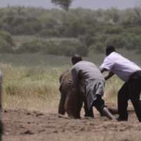 Baby Elephant rescued - India TV