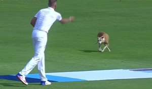India Vs England Dog - India TV
