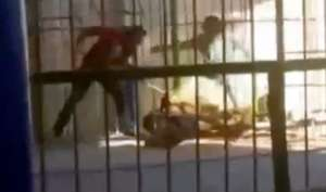 animal tamer is fatally savaged by a lion - India TV