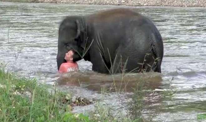 अपने ट्रेनर दोस्त को बचाने नदी में कूद पड़ा नन्हा हाथी, वीडियो वायरल - India TV