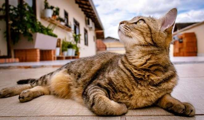 बिल्ली की मौत पर पाक डॉक्टर के खिलाफ 2.5 करोड़ रुपये मुआवजे का मुकदमा - India TV