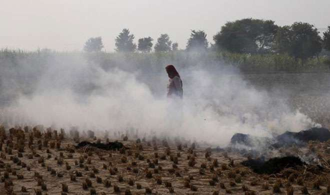 हरियाणा: प्रतिबंध के बावजूद लगातार धान की पुराली जला रहे हैं किसान - India TV
