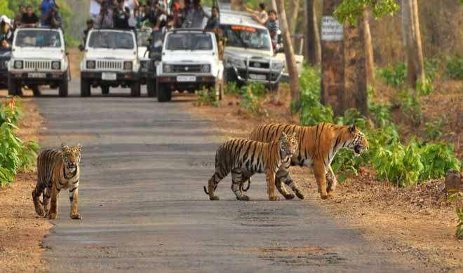 मप्र, ओडिशा और छत्तीसगढ़ में बनेंगे नए टाइगर रिजर्व