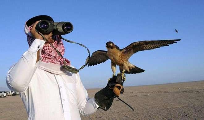इस व्यक्ति को मिली पाक के एक लुप्तप्राय पक्षी का शिकार करने की इजाज़त - India TV