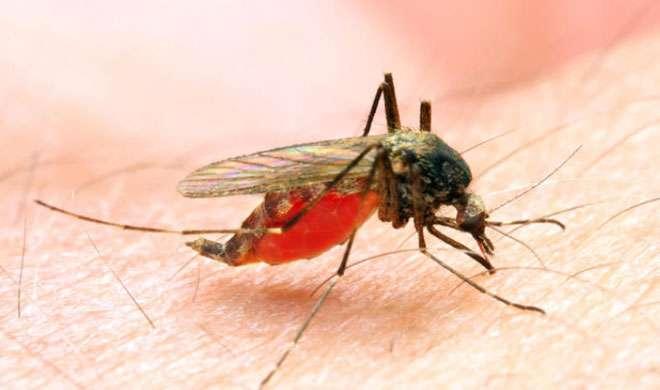 अमेरिका: वैज्ञानिकों ने की मलेरिया से निपटने के लिए दवा की खोज - India TV