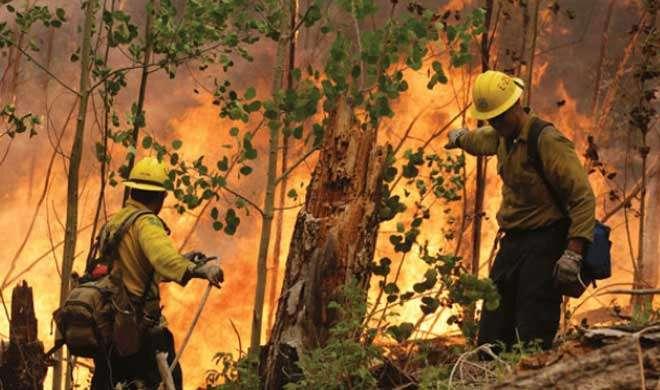 अमेरिका: जंगल में आग लगने से 7 की मौत - India TV