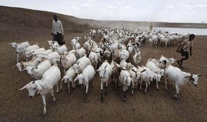 केन्या: जानवरों को चराने को लेकर टकराव, 10 लोगों की मौत - India TV