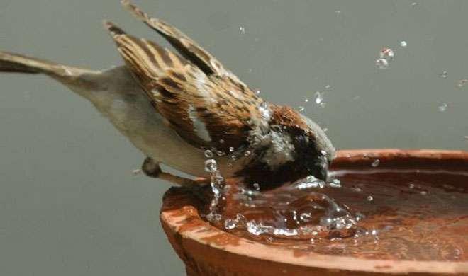 Sparrow Day: अब नहीं नहीं चेते तो वह होगी 'गूगल गौरैया'