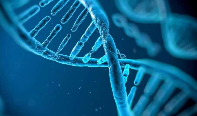 ...तो शरीर में मौजूद इतने प्रतिशत जीन होते है बेकार