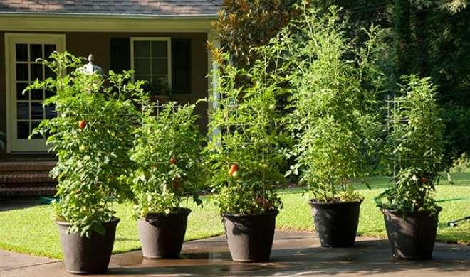 Vastu Tips: घर में लाना चाहते है सुख-समृद्धि, तो लगाएं ऐसे पेड़