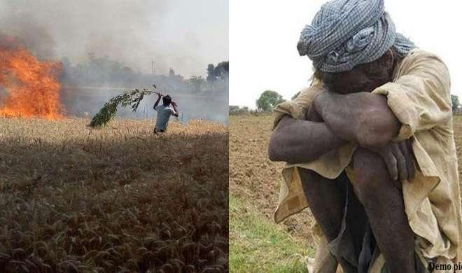 सही दाम नहीं मिलने से नाराज किसान ने अपनी उपज को लगाई आग