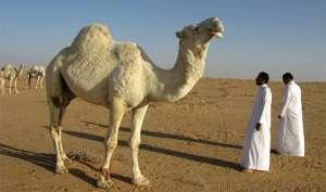 आपको शायद ही यकीन हो, सउदी अरब में बैन हैं ये 10 चीजें