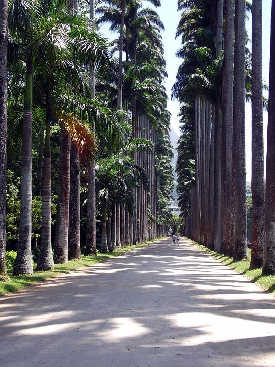 Rio de Janeiro Botanical Garden orJardimBotânico, Rio de Janeiro
