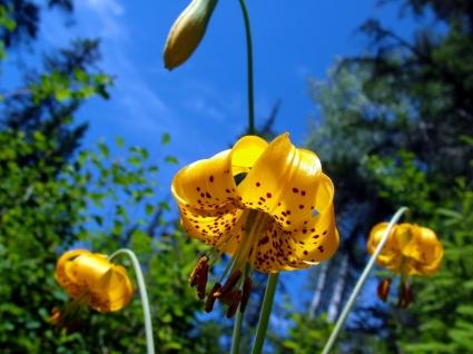 मनमोहक फूल