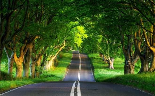 प्रकृति के बीच से निकला सड़क