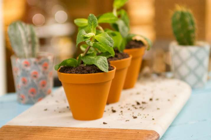 Vastu Tips about flower pot