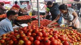 Mother Dairy to sell tomatoes at Rs 40/kg in Delhi to contain price rise- India TV