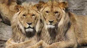 Lahore Safari Park, Lahore Safari Park Youth Killed, Lahore Safari Park Killed- India TV