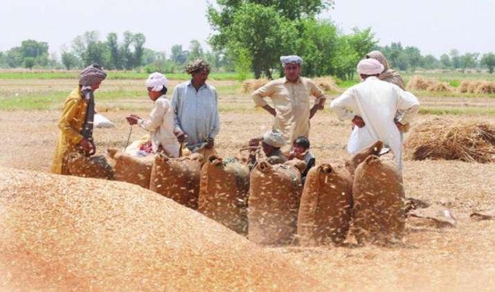 फिलहाल गेहूं पर नहीं बढ़ेगा आयात शुल्क, खाद्य मंत्री रामविलास पासवान ने दी जानकारी- IndiaTV Paisa
