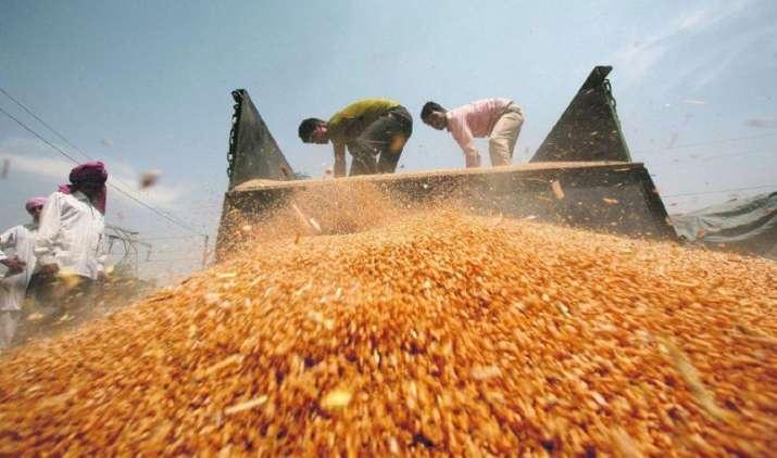 No more 'Droughts': अनाज उत्पादन 2015-16 में बढ़कर 25.31 करोड़ टन रहने का अनुमान, दालों की भी बढ़ेगी पैदावार- India TV Paisa