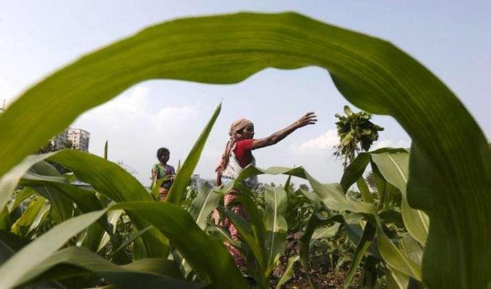 खरीफ फसलों की बुवाई 992 लाख हेक्टेयर के पार, इस बार होगा दालों का रिकॉर्ड उत्पादन- India TV Paisa