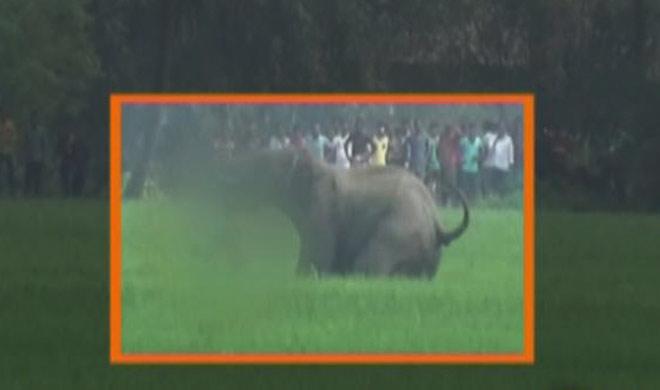 wild elephant- India TV