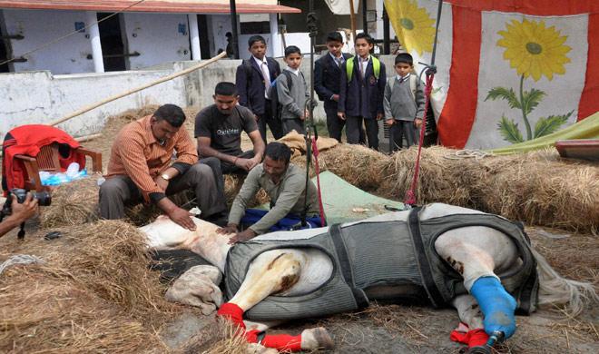 shaktiman horse- India TV