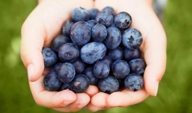 blue berry- India TV