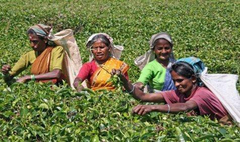 पाकिस्तान को जवाब देने के लिए टी एसोसिएशन ने की पहल, चाय कारोबार बंद करने को तैयार- India TV Paisa
