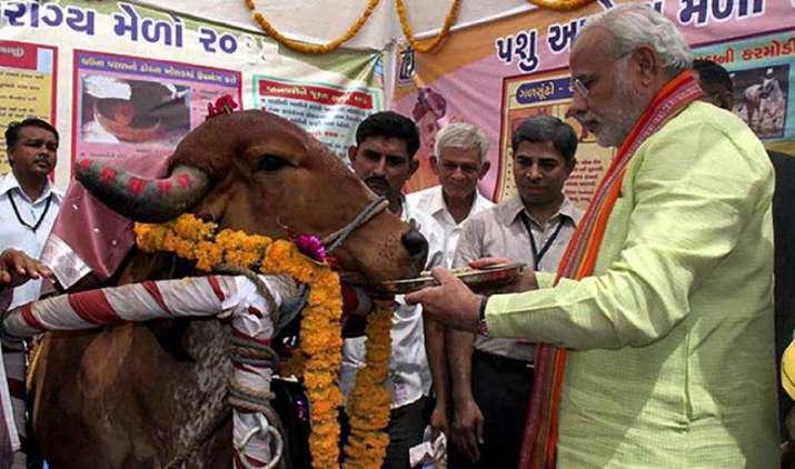 देसी गाय पालने वाले को मोदी सरकार देगी 5 लाख रुपए का इनाम, दूध उत्पादन बढ़ाने के लिए उठाया ये कदम- India TV Paisa